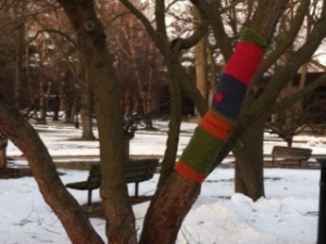 A tree branch with sweater (or sock?) on the Grinnell College campus
